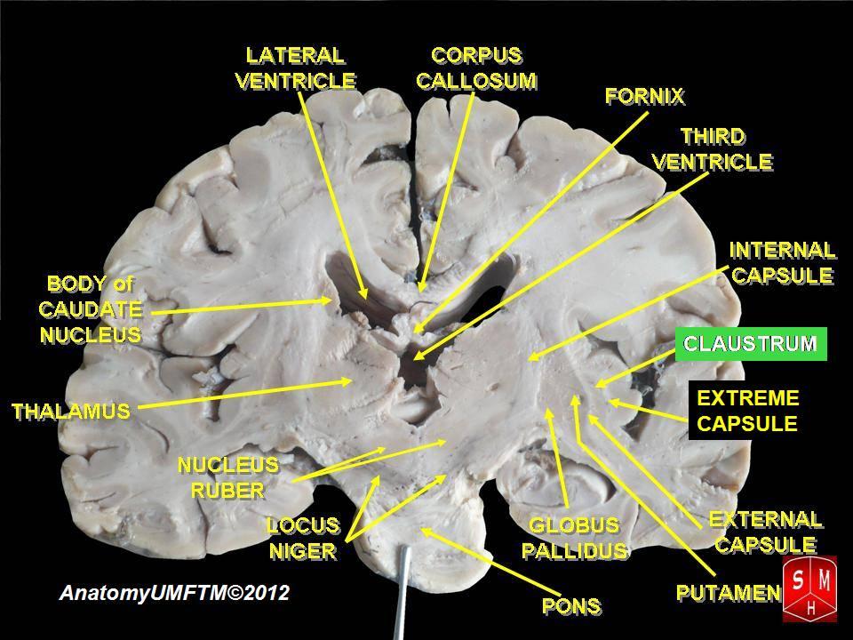 """Illo credit """"Anatomist90"""", over at Wikipedia"""
