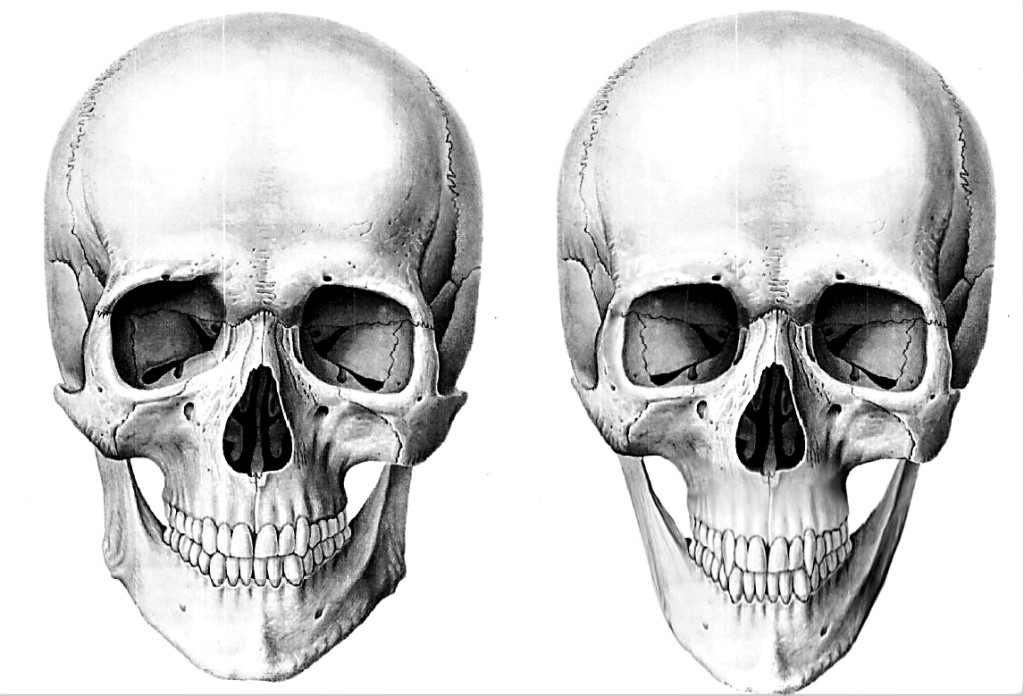 This is anthropological and unprecedented: a side-by-side comparison of vampire and baseline-Human skulls. I don't know much about the artist except that she's from Russia, she reads Dawkins, and she goes by the handle Ekaterina. Also I suspect she is awesome. She says there are ten differences. I don't know if she's kidding.